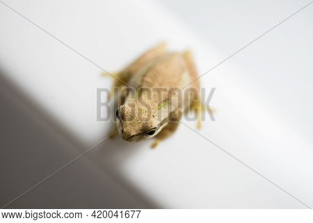 Selective Focus And Shallow Depth Of Field On The Head Of A Small Amphibian Tree Frog Viewed From Ab