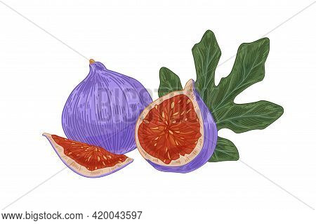 Ripe Fresh Full Fig, Its Cut Half And Quarter With Juicy Fleshy Pulp, Seeds And Leaf. Realistic Exot