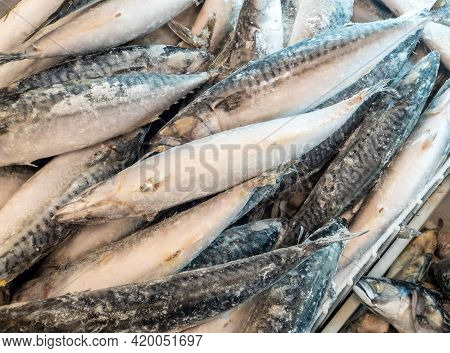 Frozen Fish, Mackerel Sold By Weight In A Refrigerator Container On A Store Counter. Frozen Food Sal