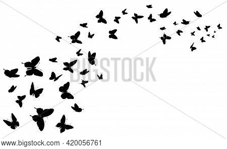 Flying Butterfly. Black Silhouette Butterflies Group. Cute Wedding Love, Summer And Spring Symbol, T