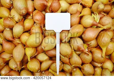 Onion Background For Planting In The Garden And Harvesting With A Blank Label Layout.onion Seedlings