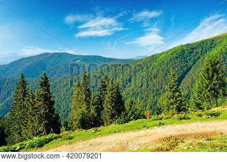 Spruce Forest On The Hills. Beautiful Nature Scenery Of Carpathian Mountains. Summer Vacation And Ou