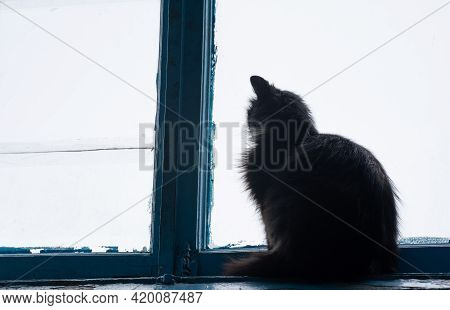 The Cat Is Sitting In Front Of The Window