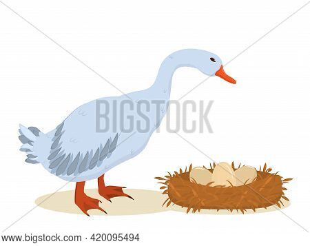 Vector Illustration Of A Gray Goose Standing Next To A Nest Of Eggs. Isolated On A White Background