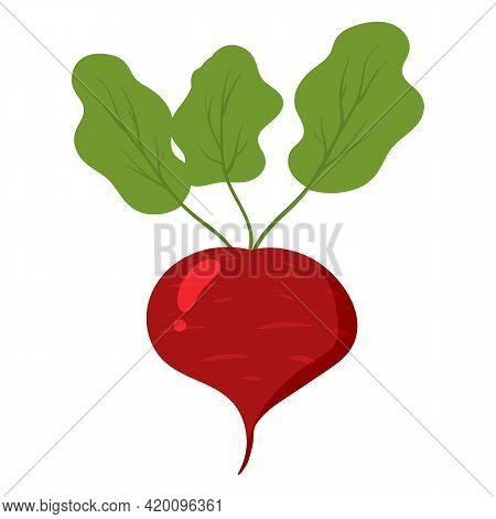 Beetroot Healthy Organic Nutrition Product. Vector Cartoon Flat Trendy Illustration Hand Drawn Isola