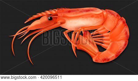 Realistic Detailed 3d Cooked Crustacean Shrimp. Vector