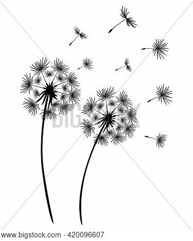 Set Of Dandelions. Black Silhouette Of Two Dandelions On A White Background. Floral Patterns, Clipar