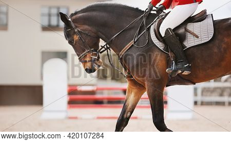 A Beautiful Bay Horse With A Rider In A Red Suit In The Saddle, Galloping Around The Arena, And Agai