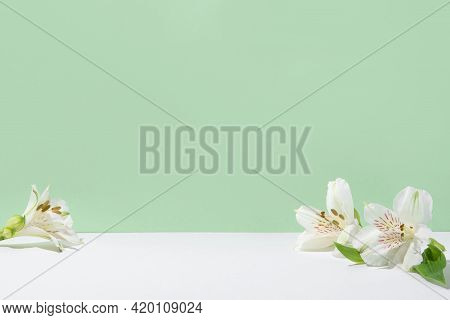 Natural Light Green Background With White Flowers.