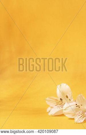 Natural Light Yellow Background With White Flowers.