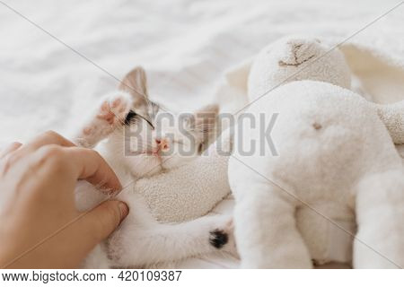 Hand Caressing Cute Little Kitten Sleeping On Soft Bed With Bunny Toy. Adoption Concept. Owner Huggi
