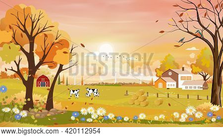 Autumn Landscape Of Farm Field With Pink Sky,wonderland Of Mid Autumn In Countryside With Cows On Gr