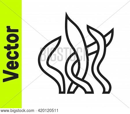 Black Line Seaweed Icon Isolated On White Background. Underwater Seaweed Spirulina, Aquatic Marine A