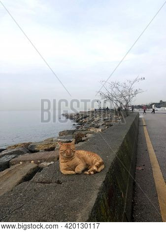 Cat In A Majestic Pose On The Embankment Against The Background Of The Sea. High Quality Photo