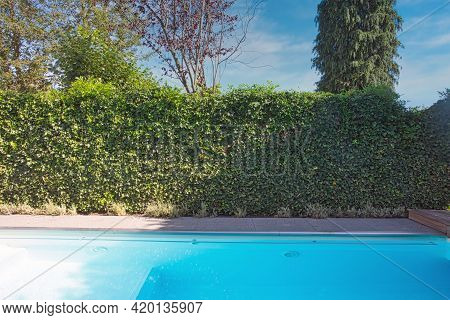 Backyard With Outdoor Inground Residential Swimming Pool, Garden, Deck And Green Hedge Sunny Day In