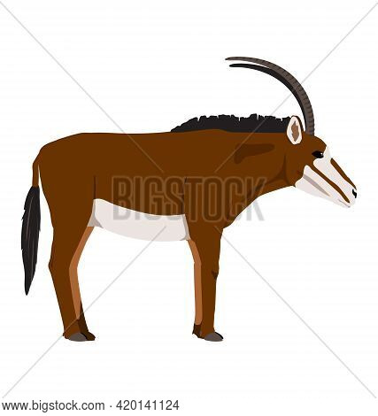 Hippotragus Niger - Sable Antelope - Female - Side View - Flat Vector Isolated