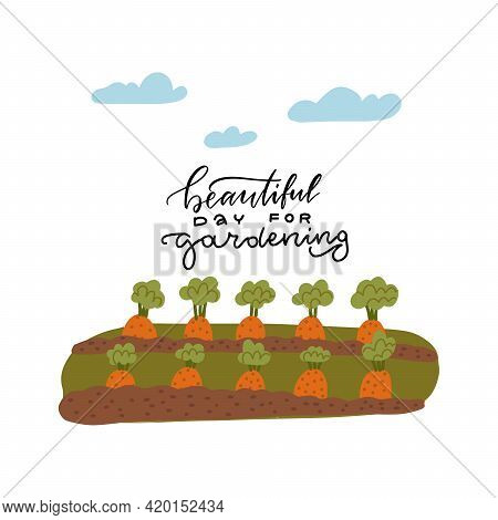 A Bed Of Carrots For The Vegetable Garden. Lettering Text - Beautiful Day For Gardening. Vector Illu