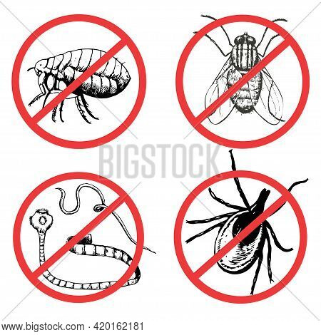 Set Of Ink Drawn Pests, Worm, Fly, Flea, Mite. Vector Illustration.