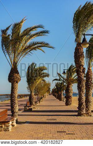 Walking Path Area At San Pedro Del Pinatar Park, Murcia Spain. Tourist Attraction