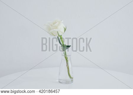 White Rose In Vase On A White Table. Copy Space For Text. Light Minimal Interior, Decoration Of Livi