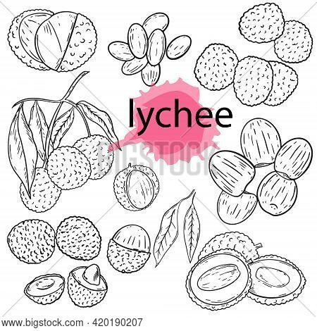 Litchi Fruit Outline Set. Vector. Sketch. Berry Whole And Halves, Peeled Fruits. Branch With Fruits.