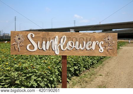 Sunflowers Sign. Field of Sunflowers with a Sunflowers Sign. Sunflowers for sale.
