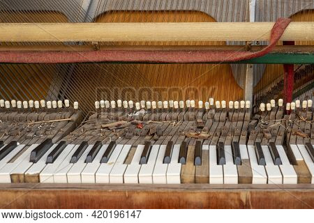 Old Discarded Piano With Damaged Keys And Felt Hammers