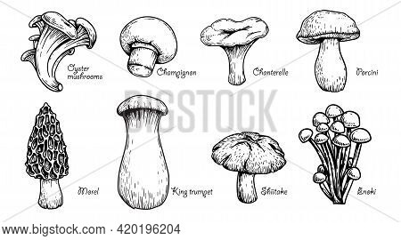 Various Mushrooms Set. Hand Drawn Sketch Style. Oyster, Champignon, Chanterelle, Porcini, Morel, Tru