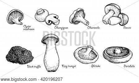 Various Mushrooms Set. Hand Drawn Sketch Style. Oyster, Champignon, Chanterelle, Porcini, Black Truf