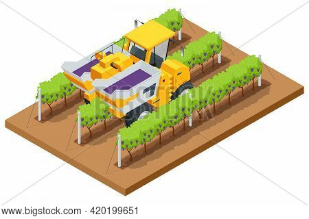 Isometric Mechanical Grape Harvester Works By Beating The Vine With Rubber Sticks To Get The Vine To