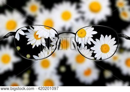 Detail of daisies daisy flowers with golden sunbeams spring summer sunshine blur blurry clear vision seeing sharp