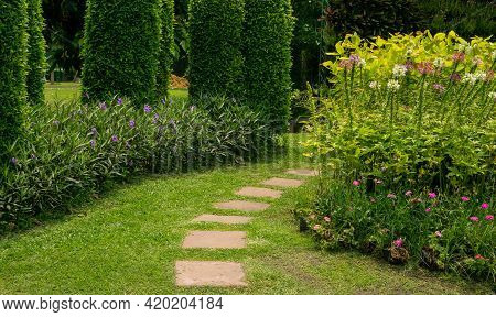 Stepping Walkway In Small Garden Greenery Shrubs  And Flower