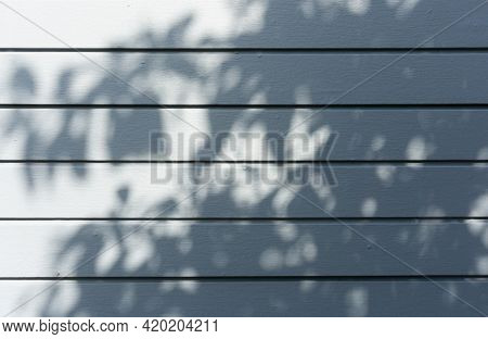Blurred And Abstract Bokeh Backgrounds Of Black Shadow And Shading Of Leaf And Twig From Tree Branch