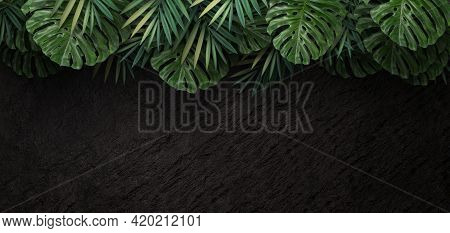 Green Tropical Leaves On Dark Stone Background, 3d Rendering
