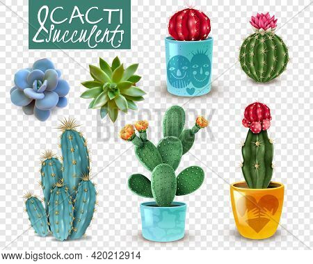 Blooming Cacti And Popular Succulents Varieties Easy Care Decorative Indoor Plants Realistic Set Tra