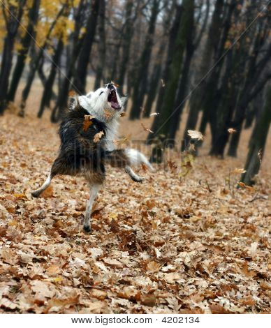Photo Of Jamping Dog On A Autumn Leaf