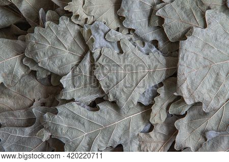 Background Image Of Dry Oak Leaves On A Bath Broom. Close-up