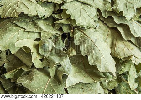 Dry Pale Green Oak Leaves Collected In A Bath Broom. Background Image