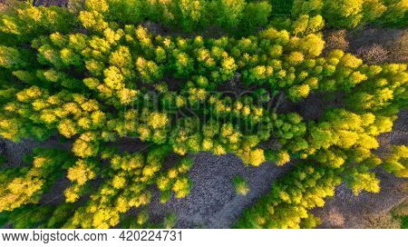Wood And Trees In Spring, Aerial View Of An Endless Woodland Forest With Beautiful Colors During Spr