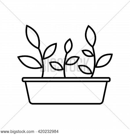 Garden Box With Seedlings. Black And White Simple Icon Of Young Sprouts With Leaves In The Seedling