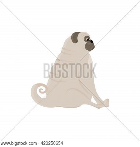 Cute Body Positive Pug Sits And Looks Into The Distance. Vector Illustration Isolated On A White Bac