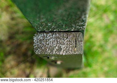 Small Lichen Gray On A Cut Of A Wooden Board.