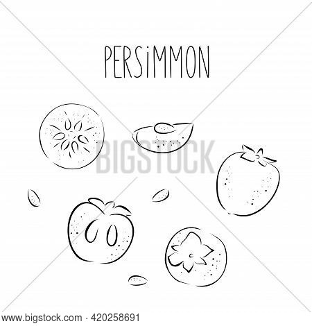 Bright Vector Set Of Black Line Half, Slice And Whole Of Juicy Persimmon. Fresh Hand Draw And Doodle