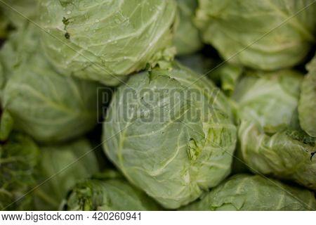 Organic Fresh Green Cabbage Head In The Garden. Fresh Green Cabbage Heads On The Farm Market. Photo