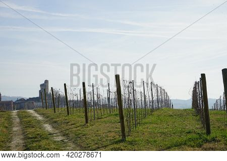 Vineyard In The Langhe During The Winter Near Serralunga D'alba, Piedmont - Italy