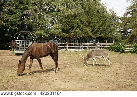 A Horse And A Donkey In The Corral Of A Farm In Piedmont, Italy