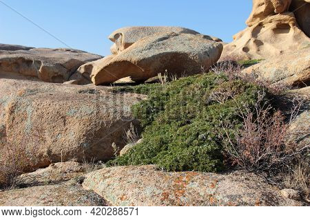 Unusually Shaped Beautiful And Smooth Volcanic Stones And Rocks With Bushes In The Bektau-ata Tract.