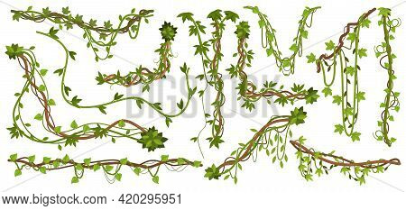 Jungle Liana Plants. Tropical Vine Branches With Leaves, Climbing Wild Liana Species Isolated Vector