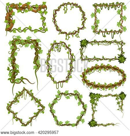 Liana Vines Frames. Tropical Climbing Rainforest Plants With Leaves, Jungle Liana Plants Borders Vec