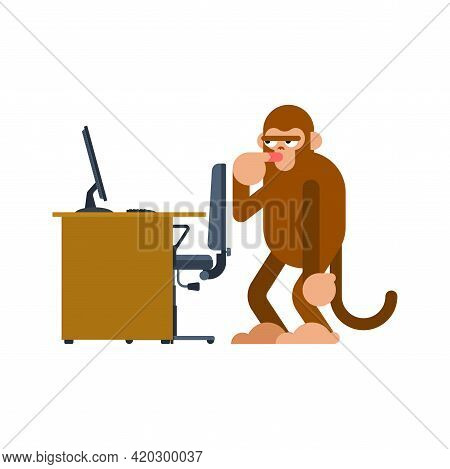 Monkey And Pc. Ape Man And Computer. Monkey Think